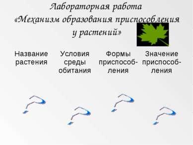 Лабораторная работа «Механизм образования приспособления у растений»