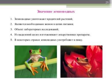 * Значение земноводных Земноводные уничтожают вредителей растений; Являются н...