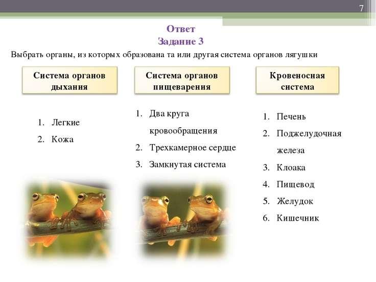 Ответ Задание 3 Выбрать органы, из которых образована та или другая система о...