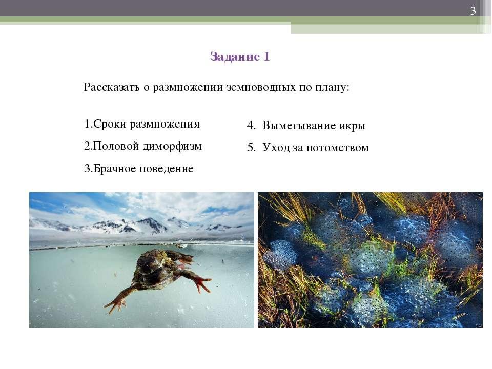 Задание 1 Рассказать о размножении земноводных по плану: Сроки размножения По...