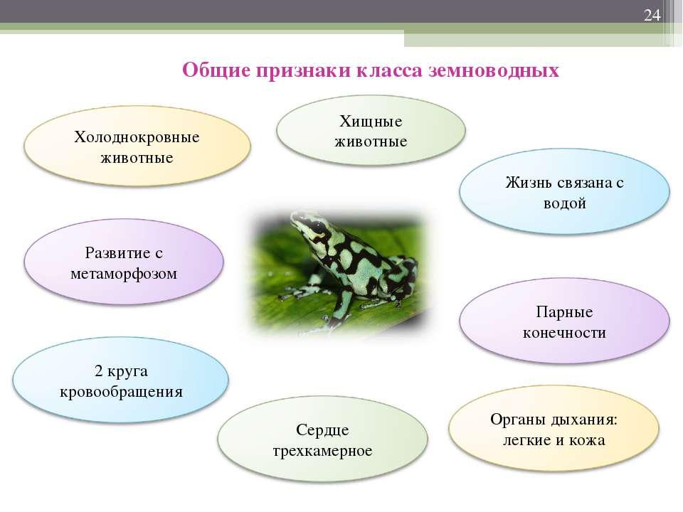 * Общие признаки класса земноводных