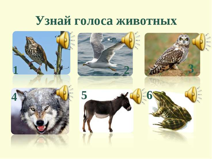 Узнай голоса животных 5 2 3 1 4 6