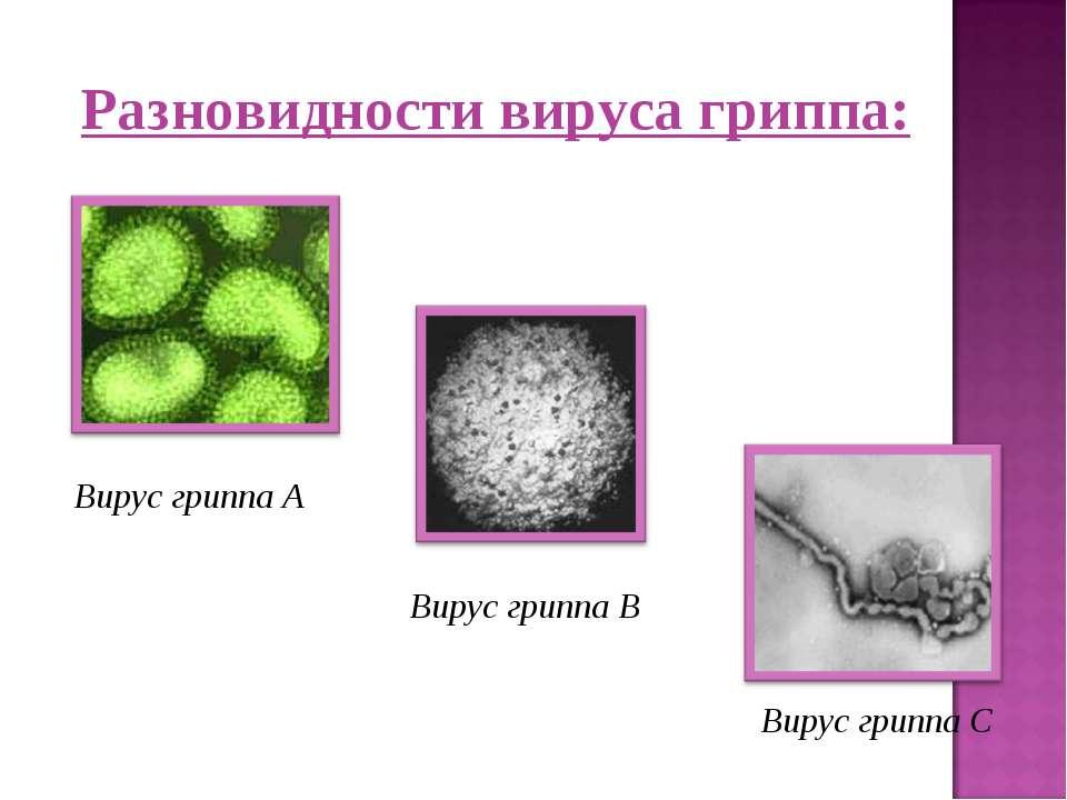 Вирус гриппа А Вирус гриппа В Вирус гриппа С Разновидности вируса гриппа: