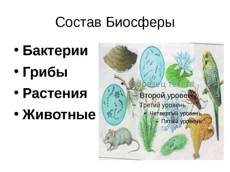 Состав Биосферы Бактерии Грибы Растения Животные