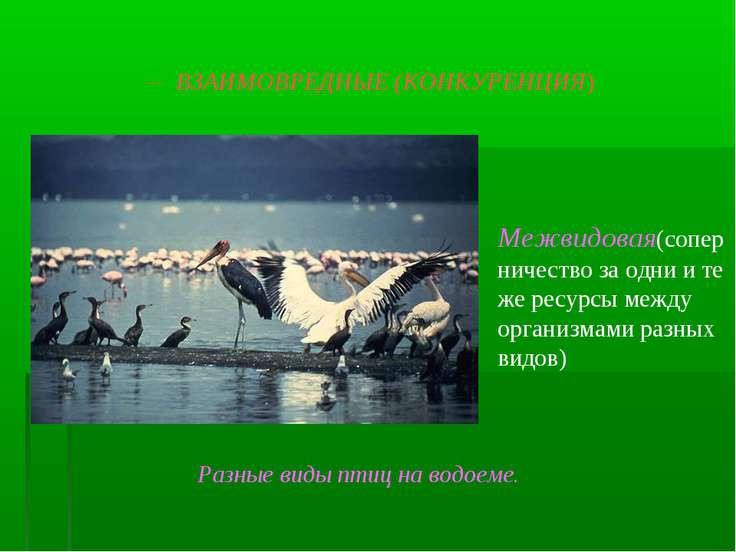 -- ВЗАИМОВРЕДНЫЕ (КОНКУРЕНЦИЯ) Межвидовая(соперничество за одни и те же ресур...