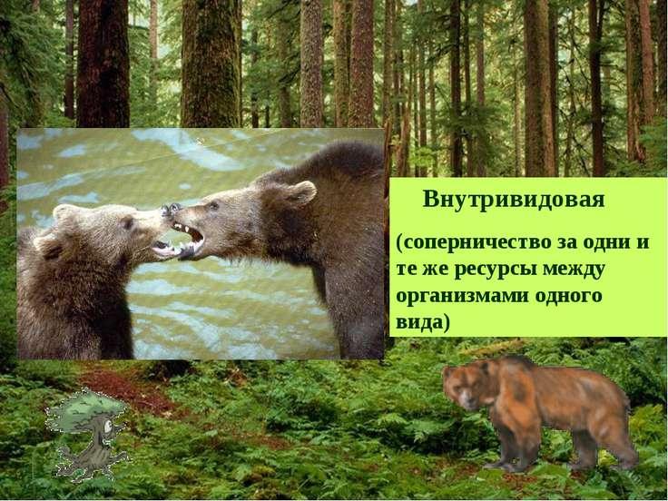 Внутривидовая (соперничество за одни и те же ресурсы между организмами одного...