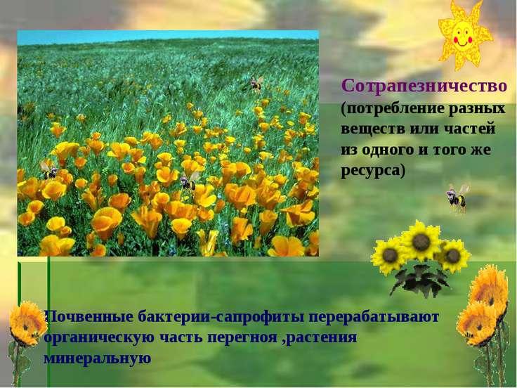 Сотрапезничество (потребление разных веществ или частей из одного и того же р...