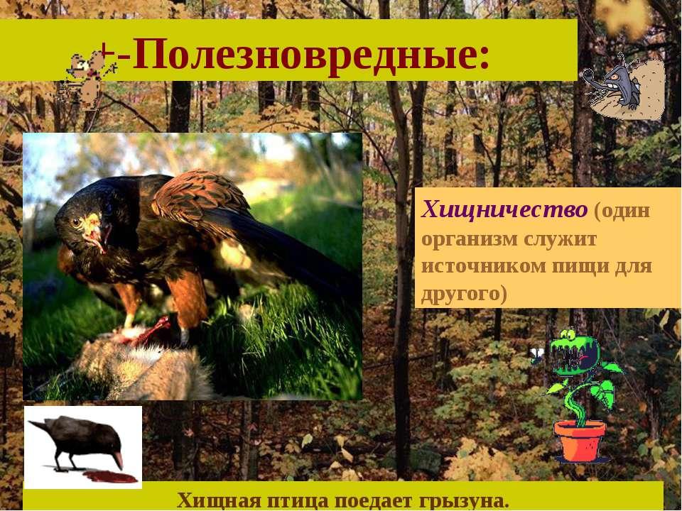 +-Полезновредные: Хищничество (один организм служит источником пищи для друго...