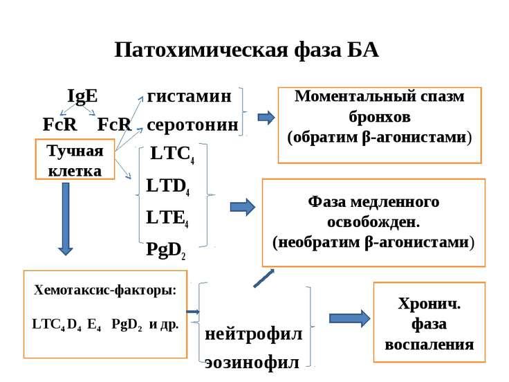 Патохимическая фаза БА IgЕ гистамин FcR FcR серотонин R LTC4 LTD4 LTE4 PgD2 н...