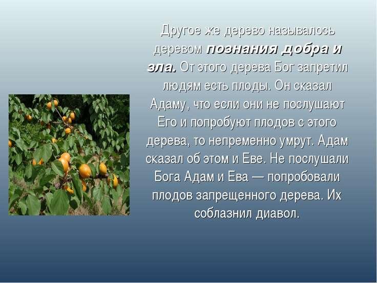 Другое же дерево называлось деревом познания добра и зла. От этого дерева Бог...