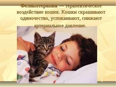 Фелинотерапия— терапевтическое воздействие кошек. Кошки скрашивают одиночест...