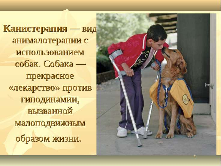 Канистерапия— вид анималотерапии с использованием собак. Собака — прекрасное...