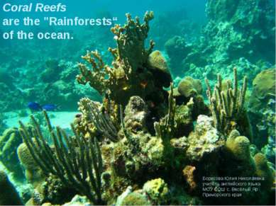 "Coral Reefs are the ""Rainforests"" of the ocean. Борисова Юлия Николаевна учит..."