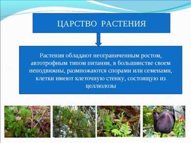 ЦАРСТВО РАСТЕНИЯ Растения обладают неограниченным ростом, автотрофным типом п...