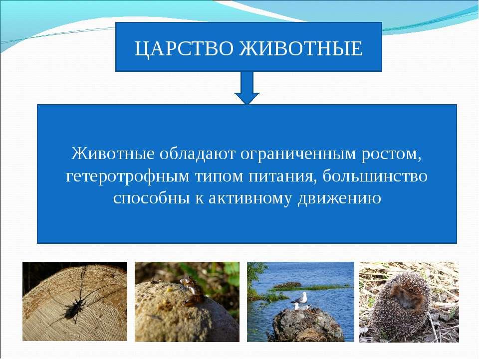 ЦАРСТВО ЖИВОТНЫЕ Животные обладают ограниченным ростом, гетеротрофным типом п...
