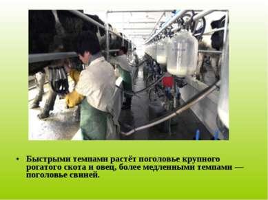 Быстрыми темпами растёт поголовье крупного рогатого скота и овец, более медле...