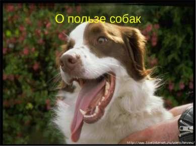 О пользе собак