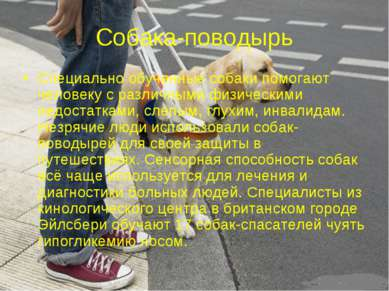 Собака-поводырь Специально обученные собаки помогают человеку с различными фи...