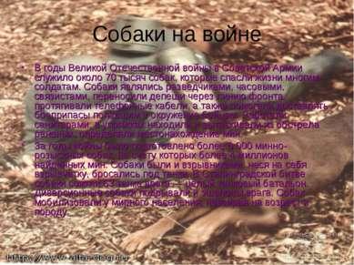 Собаки на войне В годы Великой Отечественной войны в Советской Армии служило ...