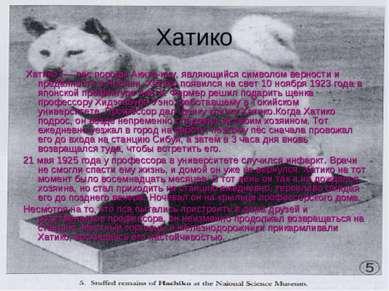 Хатико Хатико (— пёс породы Акита-ину, являющийся символом верности и преданн...