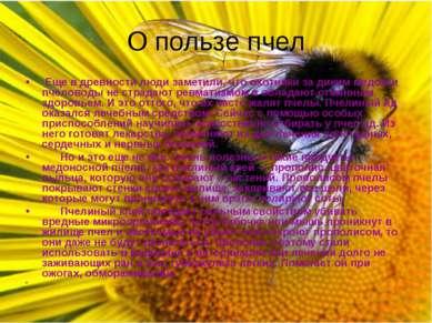 О пользе пчел Еще в древности люди заметили, что охотники за диким медом и пч...