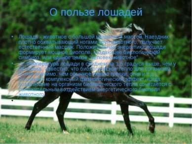 О пользе лошадей Лошадь - животное с большой мышечной массой. Наездник плотно...