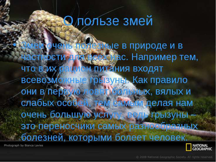 О пользе змей Змеи очень полезные в природе и в частности для всех нас. Напри...