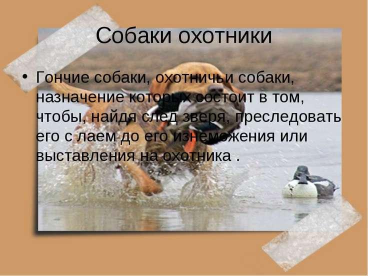 Собаки охотники Гончие собаки, охотничьи собаки, назначение которых состоит в...