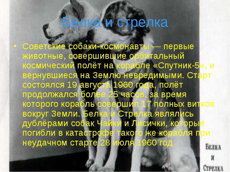 Белка и стрелка Советские собаки-космонавты — первые животные, совершившие ор...