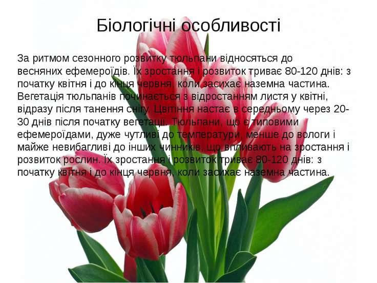 Біологічні особливості За ритмом сезонного розвитку тюльпани відносяться до в...