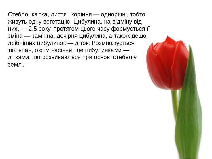 Стебло, квітка, листя і коріння— однорічні, тобто живуть одну вегетацію. Циб...