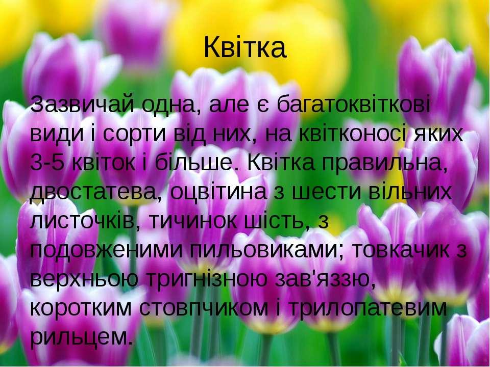 Квітка Зазвичай одна, але є багатоквіткові видиі сорти від них, на квітконос...