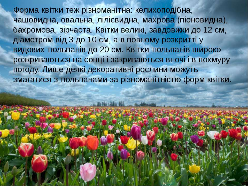 Форма квітки теж різноманітна: келихоподібна, чашовидна, овальна, лілієвидна,...