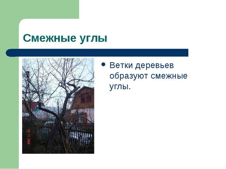 Смежные углы Ветки деревьев образуют смежные углы.