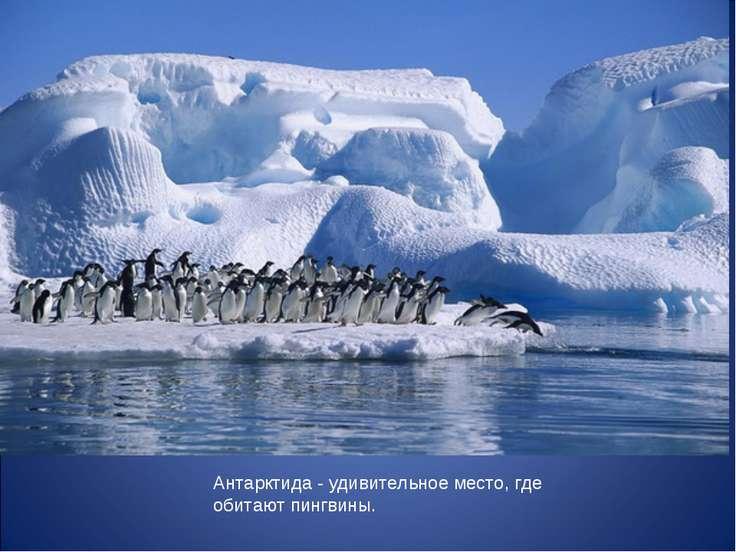 Антарктида - удивительное место, где обитают пингвины.