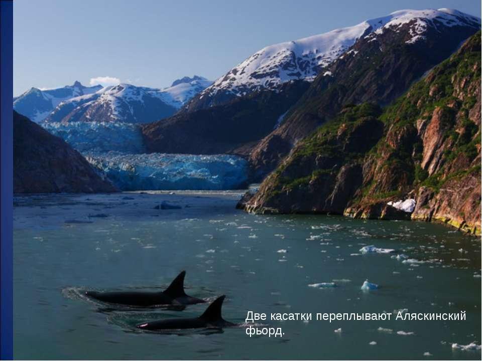Две касатки переплывают Аляскинский фьорд.