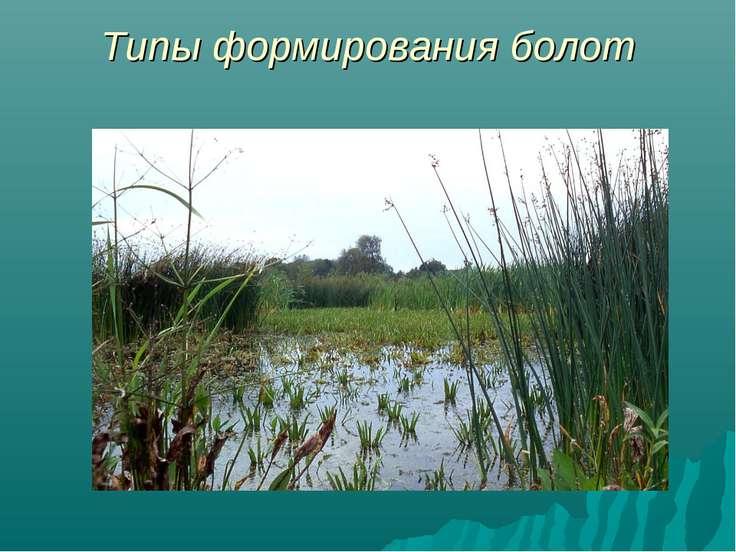 Типы формирования болот
