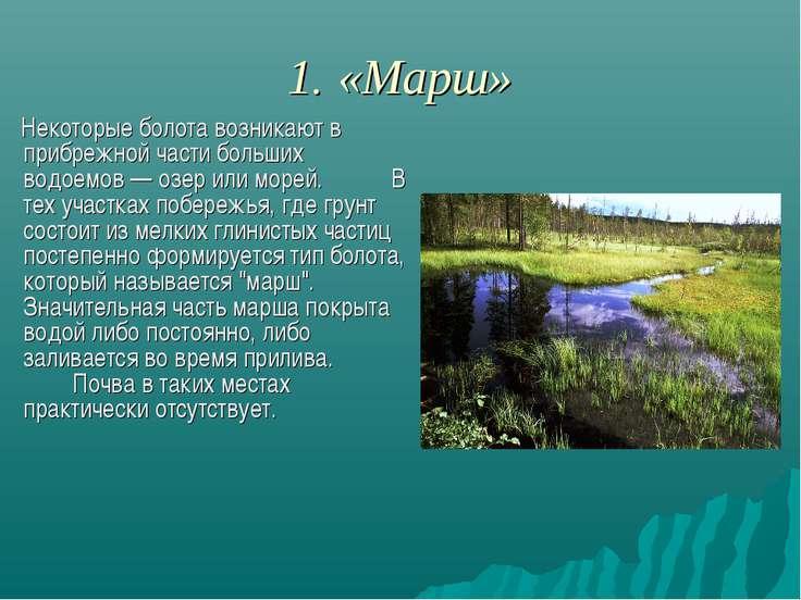 1. «Марш» Некоторые болота возникают в прибрежной части больших водоемов — оз...