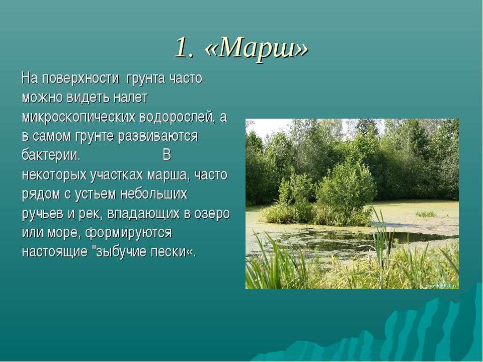 1. «Марш» На поверхности грунта часто можно видеть налет микроскопических вод...