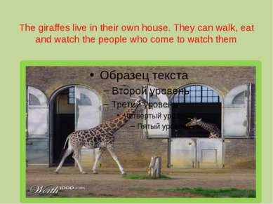 The giraffes live in their own house. They can walk, eat and watch the people...