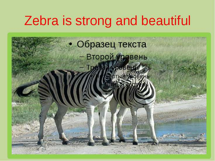 Zebra is strong and beautiful