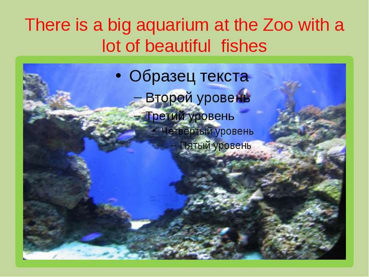 There is a big aquarium at the Zoo with a lot of beautiful fishes