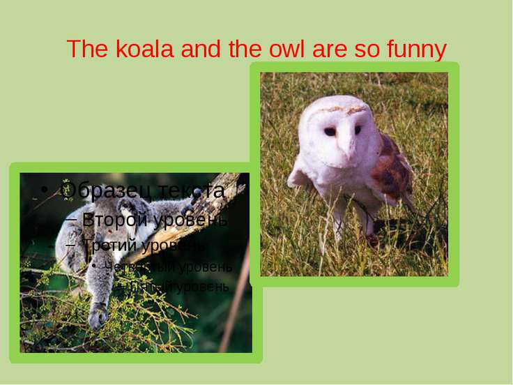 The koala and the owl are so funny
