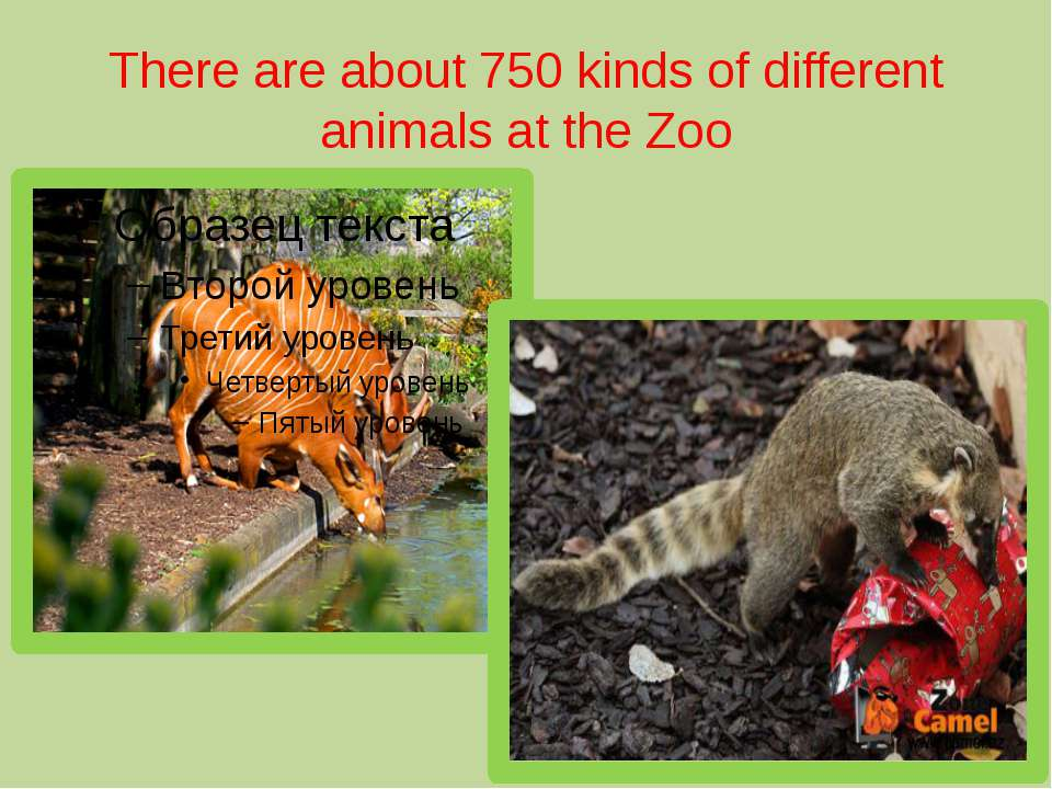 There are about 750 kinds of different animals at the Zoo