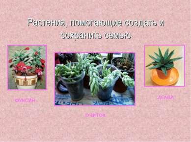 Растения, помогающие создать и сохранить семью ФУКСИЯ ОЧИТОК АГАВА