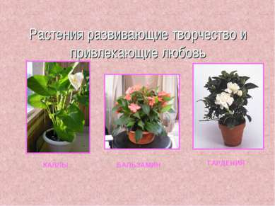 Растения развивающие творчество и привлекающие любовь КАЛЛЫ БАЛЬЗАМИН ГАРДЕНИЯ