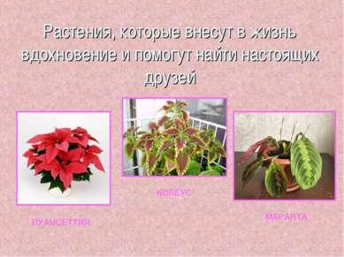 Растения, которые внесут в жизнь вдохновение и помогут найти настоящих друзей...