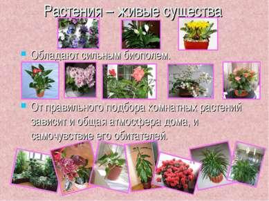 Растения – живые существа Обладают сильным биополем. От правильного подбора к...