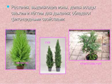 Растения, выделяющие ионы, делая воздух свежим и лёгким для дыхания; обладают...