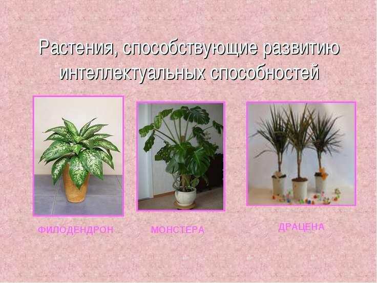 Растения, способствующие развитию интеллектуальных способностей ФИЛОДЕНДРОН М...
